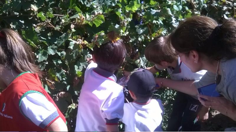Peque os cosechadores nivel inicial escuela italiana for Diseno curricular de jardin maternal